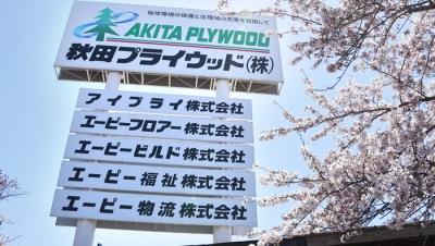 秋田プライウッド本社の桜並木が見頃を迎えています