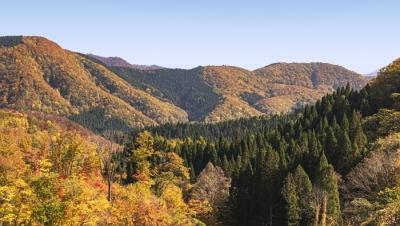 「アキプラの森 小安峡」で豊かな森づくりを